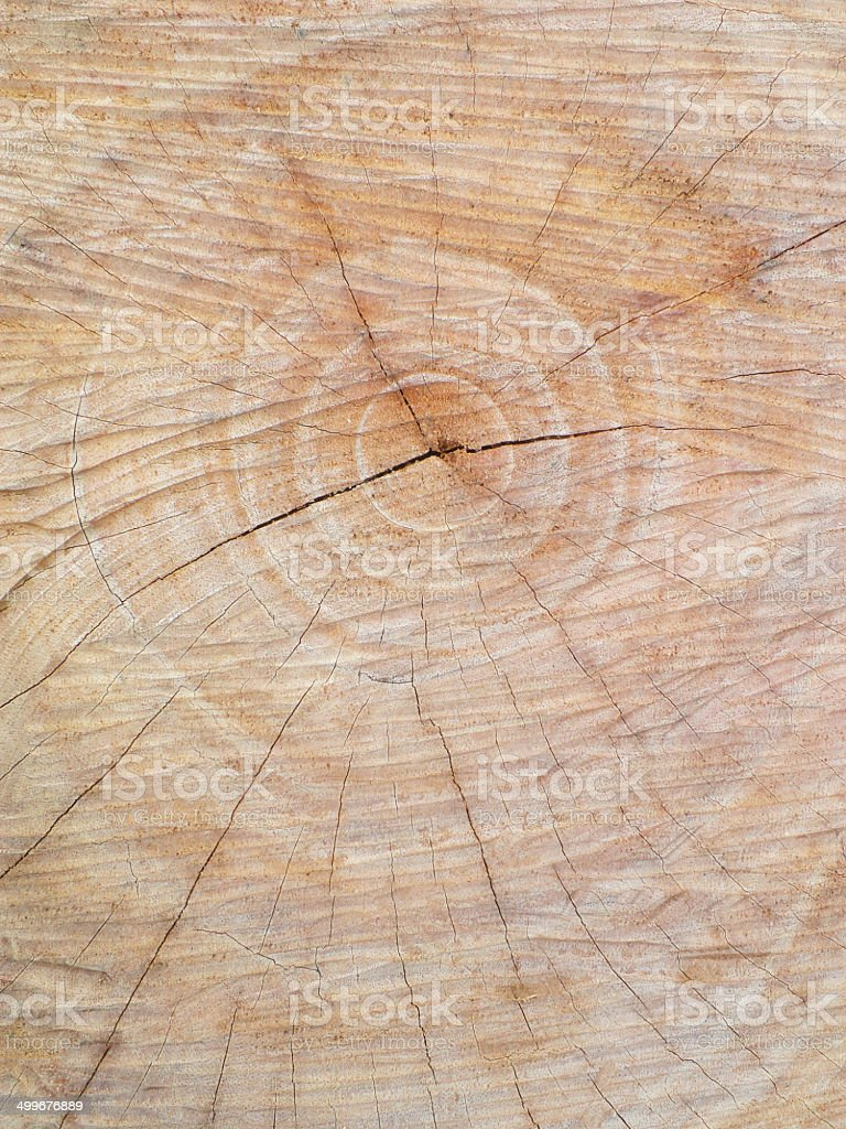 Wood texture of  trunk, close-up stock photo