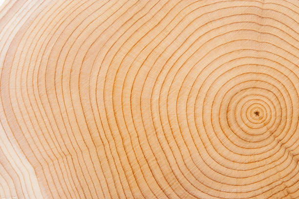 Wood Texture Tree Rings. log stock pictures, royalty-free photos & images