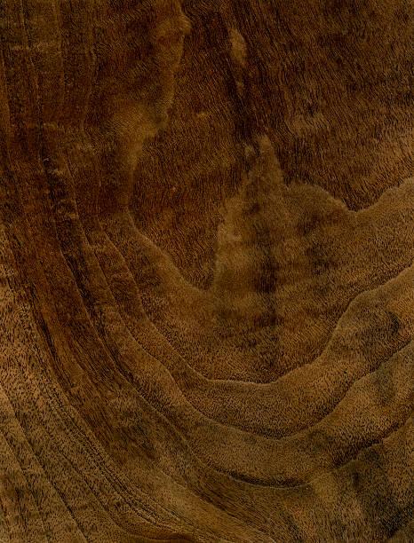 Wood Texture (Walnut tree) stock photo