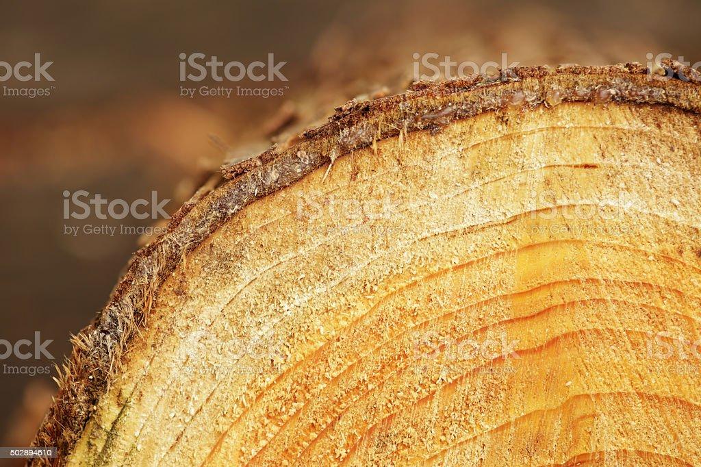 texture de bois - Photo