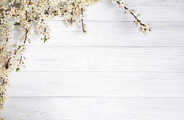 holz texture - holzblumen stock-fotos und bilder