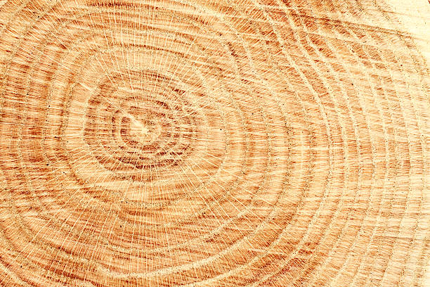 wood texture - natural pattern stock photos and pictures