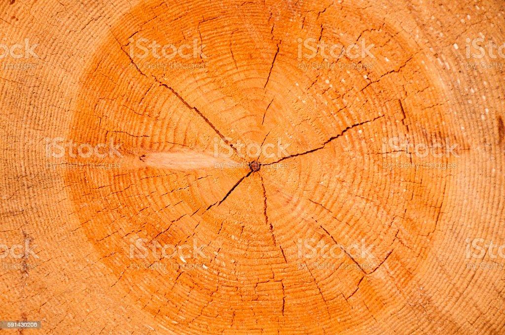 Textura de madera  - foto de stock