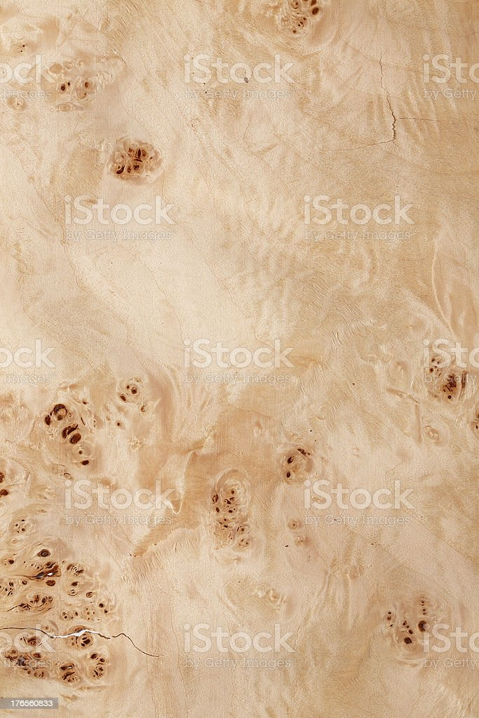 Wood texture - Poplar stock photo