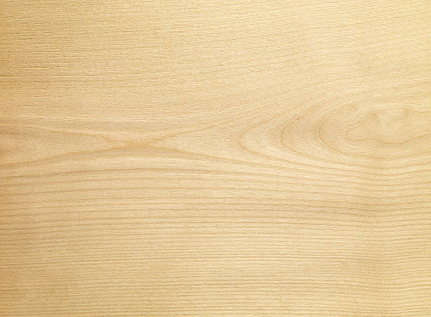 Royalty free birch wood texture pictures images and stock
