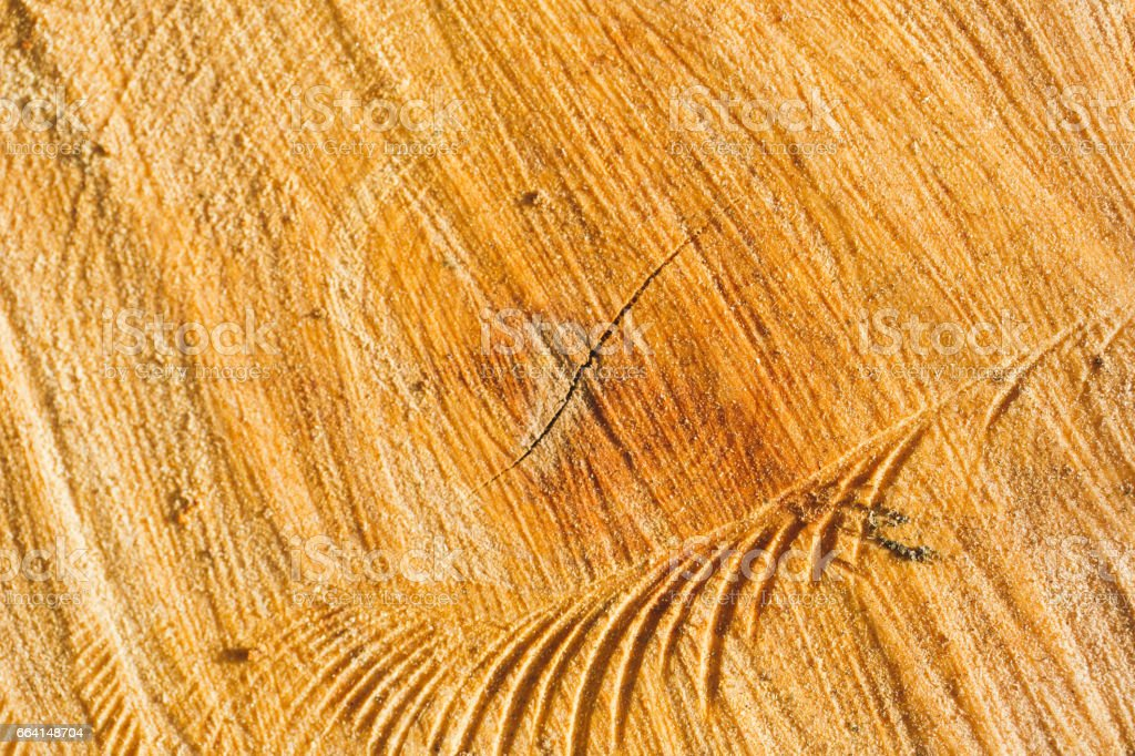 Wood texture, tree rings with tar, logs, sawed wood view from above foto stock royalty-free