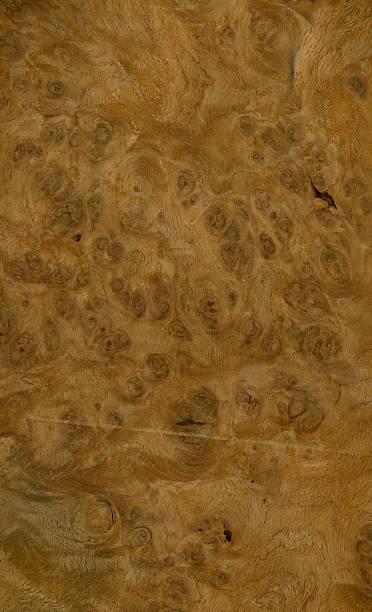 Wood Texture (Oak burl) XL stock photo