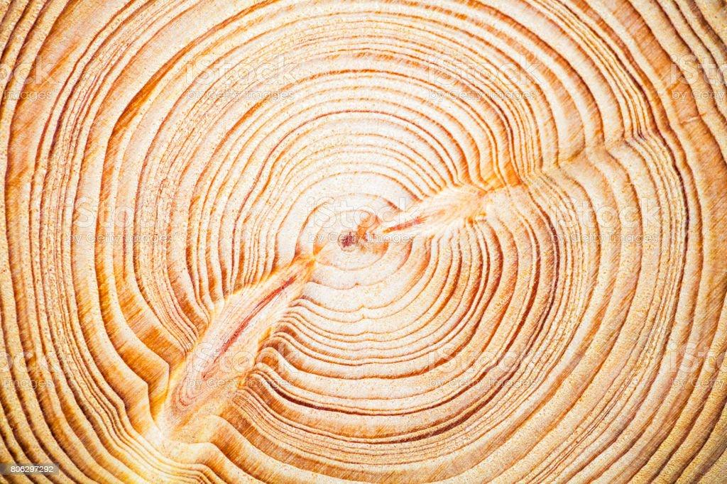 Textura de madera fondo años anillos, cedro libanés - foto de stock