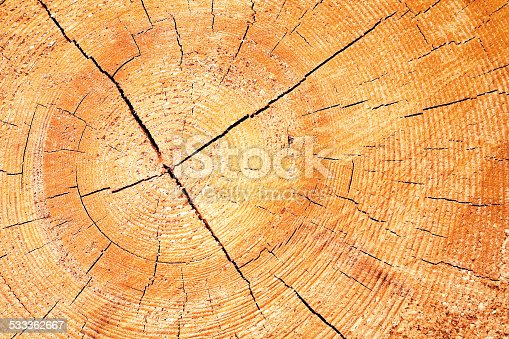 465559373istockphoto wood timber background 533362667