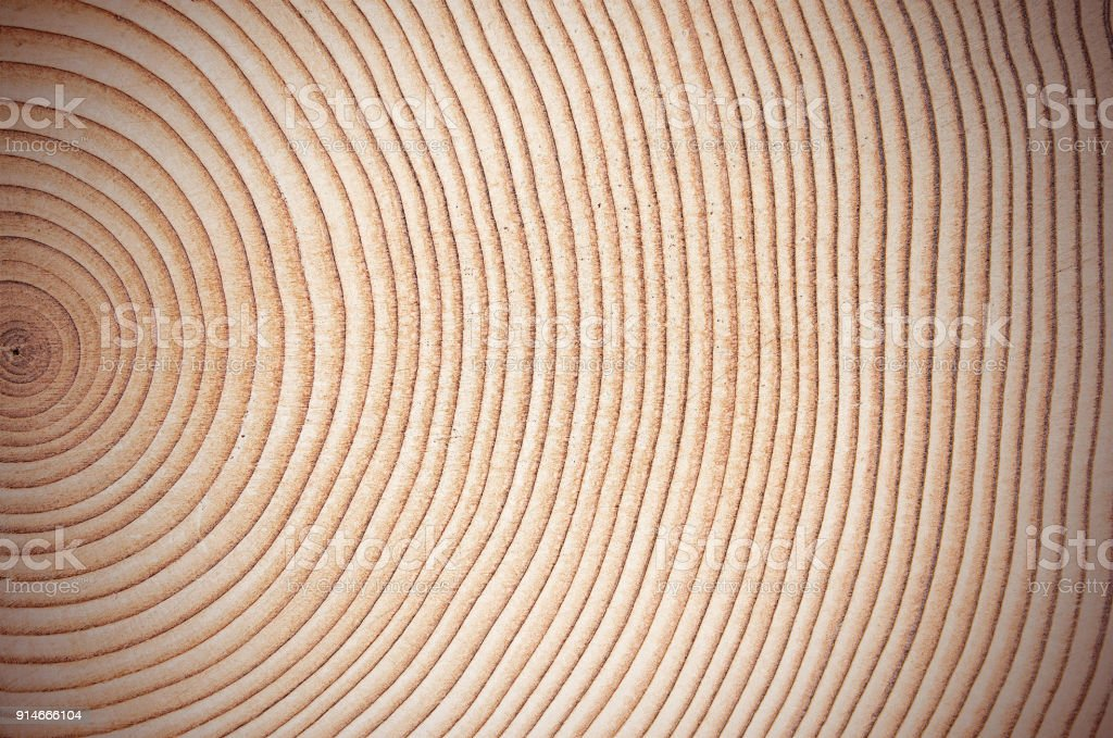 Wood tree rings showing even growth, good background stock photo