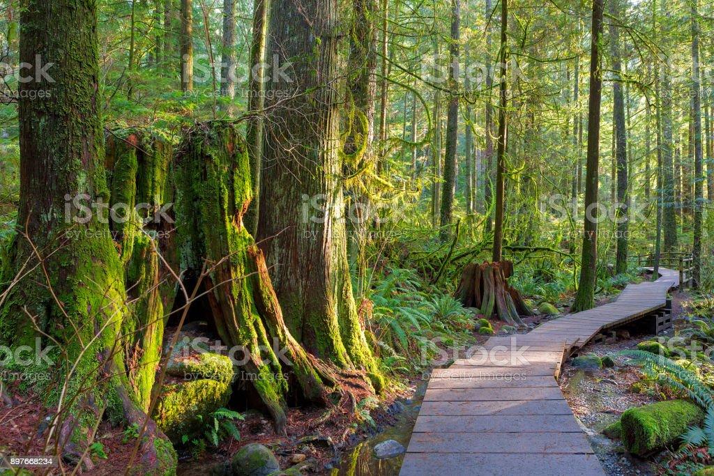 Hölzernen Gehweg Pfad Wanderweg durch Wald in Lynn Canyon Park in der kommunalen BC Kanada – Foto