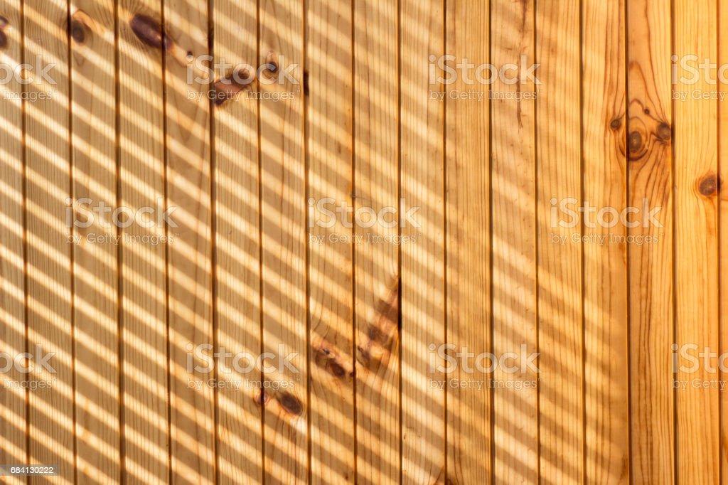 Trä med ljus strålar royaltyfri bildbanksbilder