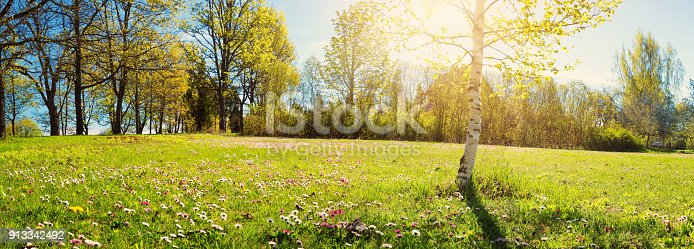 istock Wood with spring flowers 913342492