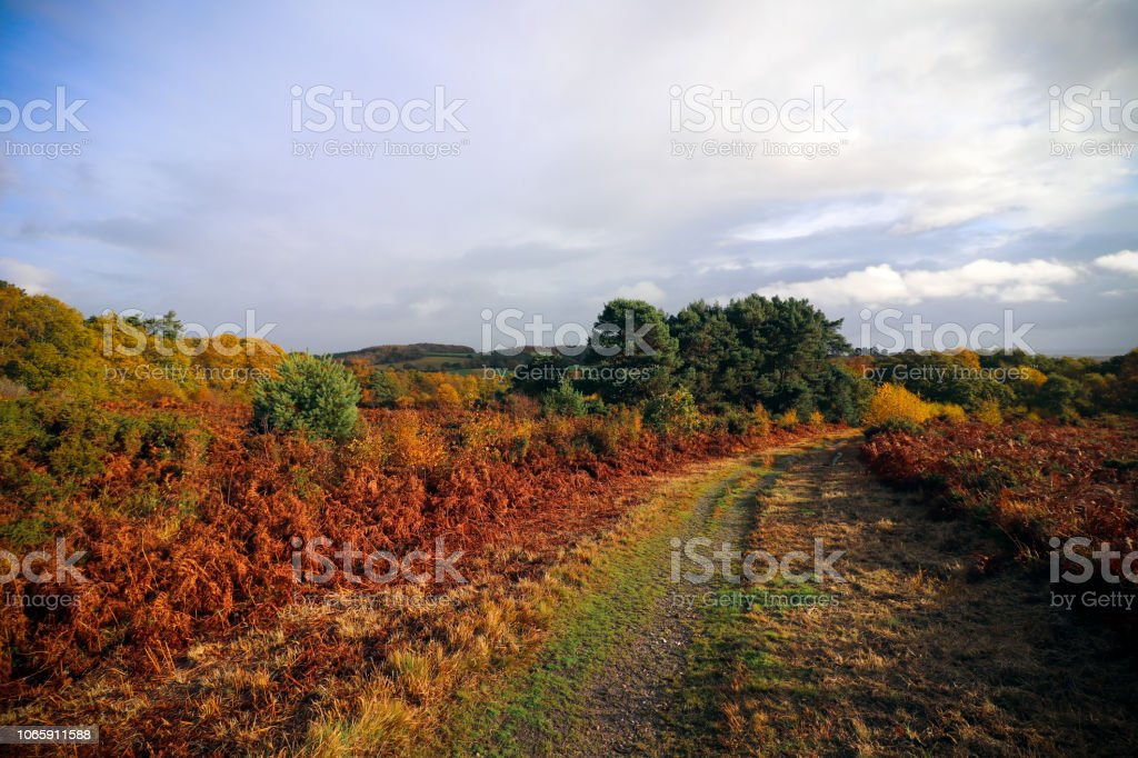 Woodbury Common in Devon stock photo