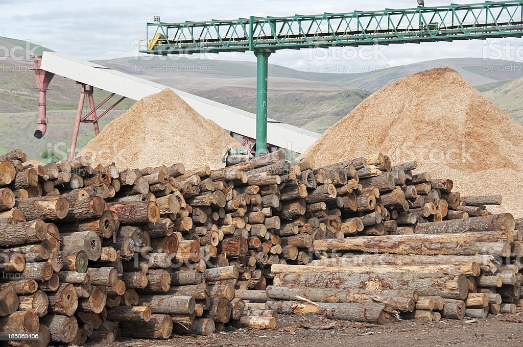 Woodchip piles under conveyor belt stock photo