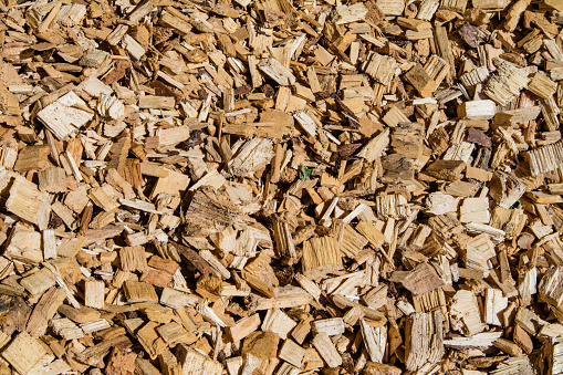 Woodchip solid fuel for Biomass plant