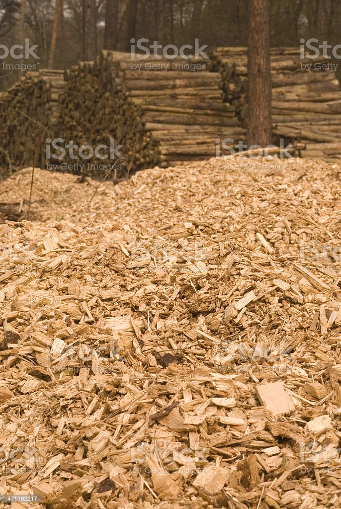 Woodchips and tree trunks in german forest royalty-free stock photo