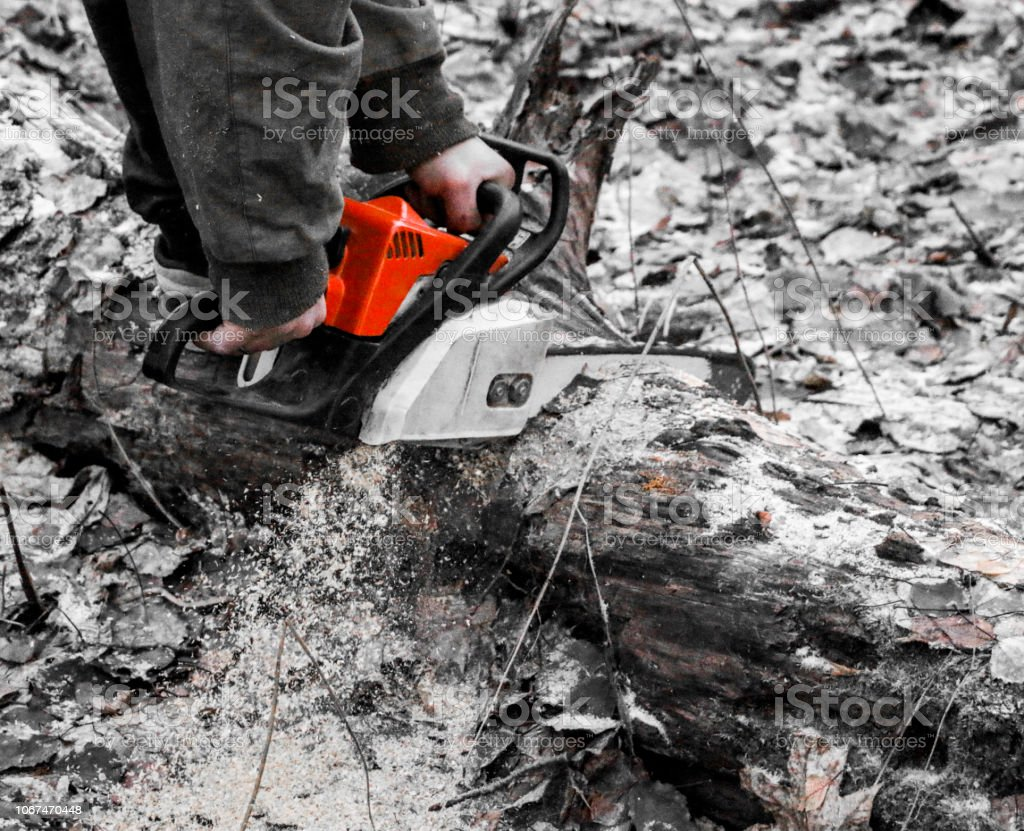 Woodcutter saws tree with chainsaw in forest. woodcutter\'s hand with...