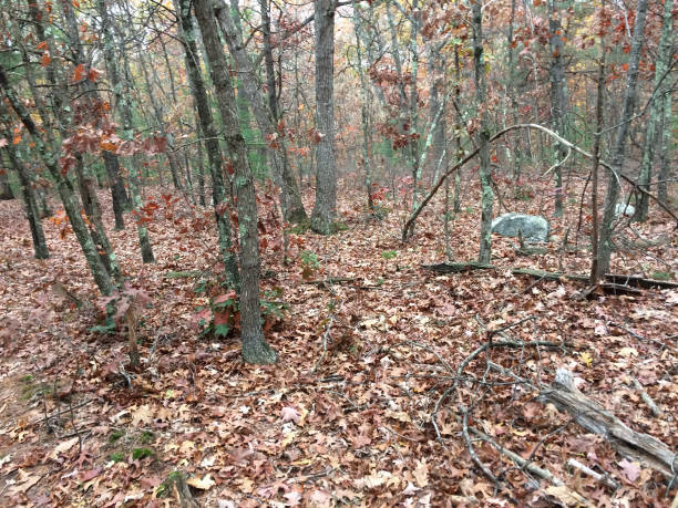 IMG_1310 Wooded Area In Autumn - Middlesex Fells - Winchester, MA, USA stock photo