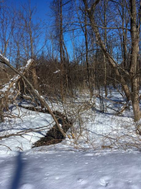IMG_7047 Wooded landscape with snow in New England stock photo