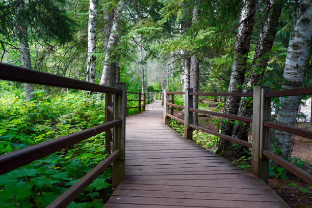 Wooded Trail along Gooseberry River stock photo