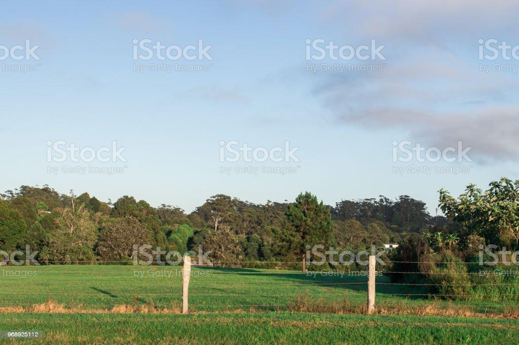De madeira e barb cerca de arame no paddock zona rural perto de bush - foto de acervo