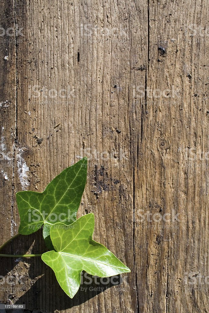 Wooden background and green foliage two royalty-free stock photo