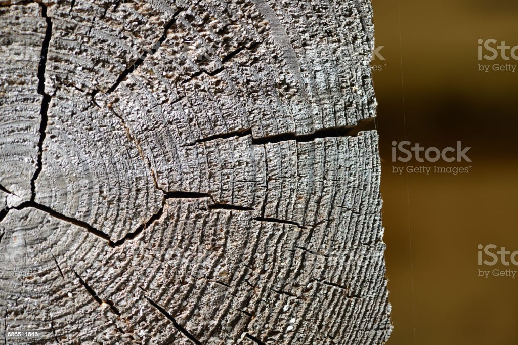 Wooden background in the form of a cut of an old log royalty free stockfoto