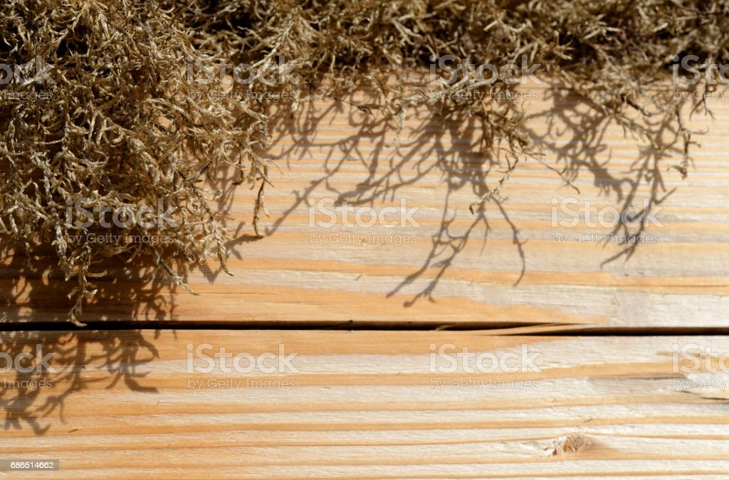 Wooden background of boards and dry moss illuminated by the sun zbiór zdjęć royalty-free