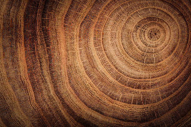 wooden background stump of oak tree felled - section of the trunk with annual rings log stock pictures, royalty-free photos & images