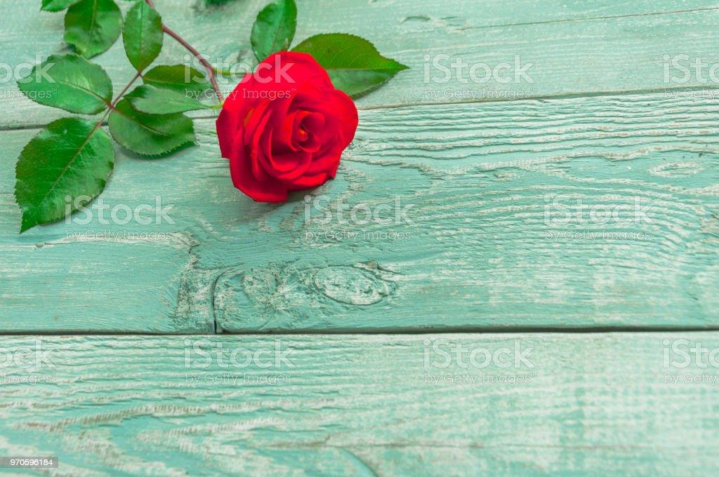 Fundo de madeira com uma única rosa vermelha - foto de acervo