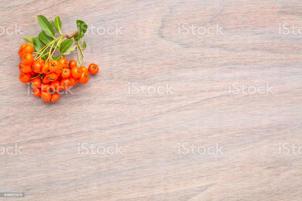 wooden background with firethorn berries stock photo