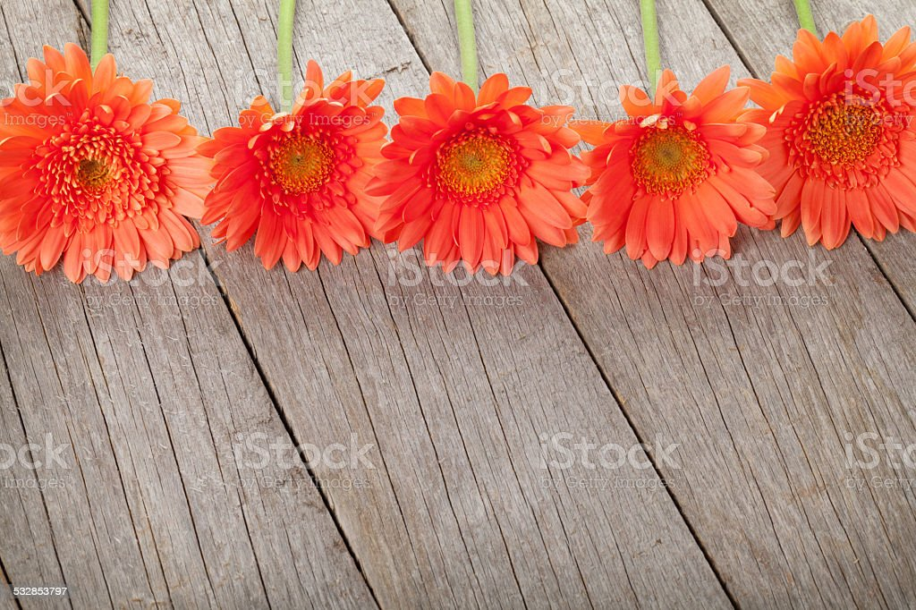 Wooden background with orange gerbera stock photo