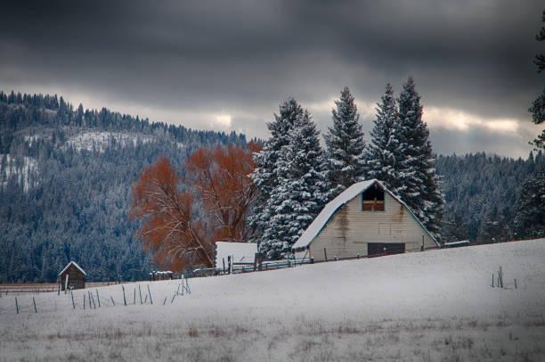 Houten schuur voor sneeuw behandelde pijnbomen foto