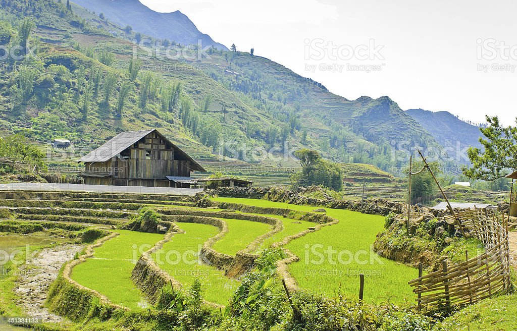 Wooden barn in rice terraced field royalty-free stock photo