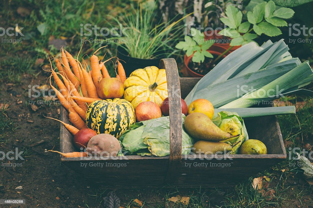 Wooden basket full of fresh, organic vegetables