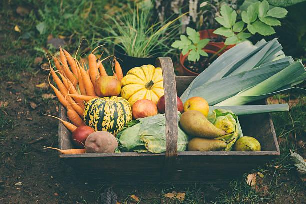 Wooden basket full of fresh, organic vegetables stock photo