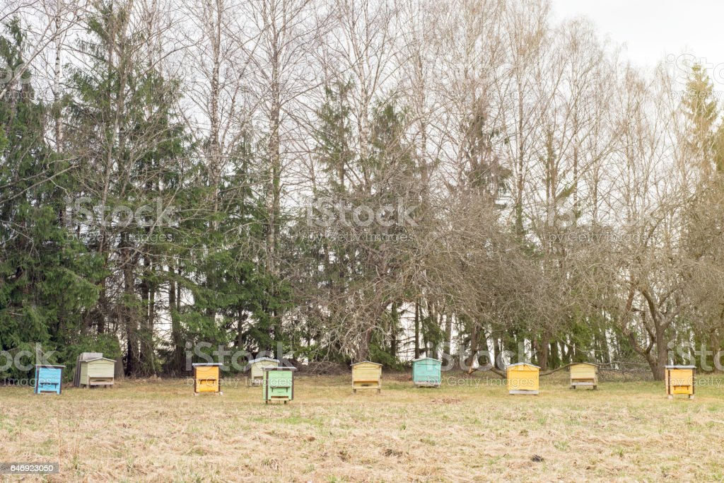 wooden bee hives in a garden stock photo
