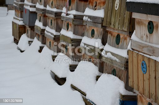 istock wooden beehives in a snow shower. Snow falls on wooden beehives of domestic production. hidden bees, however, know nothing. Autumn apiary in the garden. 1301207659