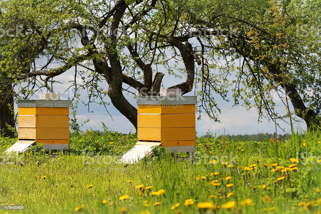 Wooden beehives in the garde stock photo