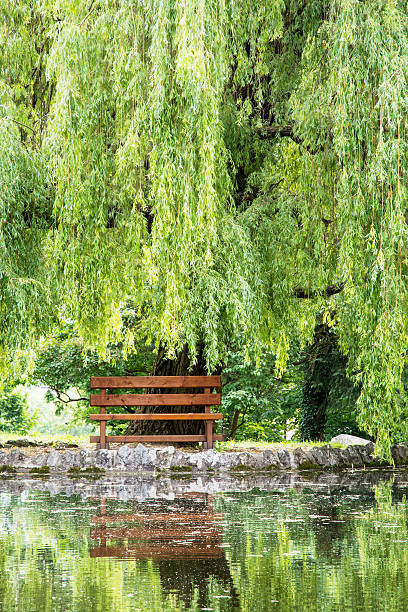 압살했다 벤치 및 수양버드나무 은 미러링된 호수 스톡 사진