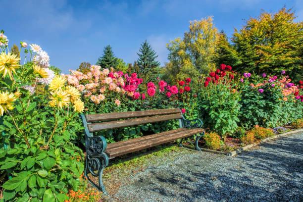 Holzbank zwischen Blumenbeet Dahlie im Sonnenlicht im park – Foto