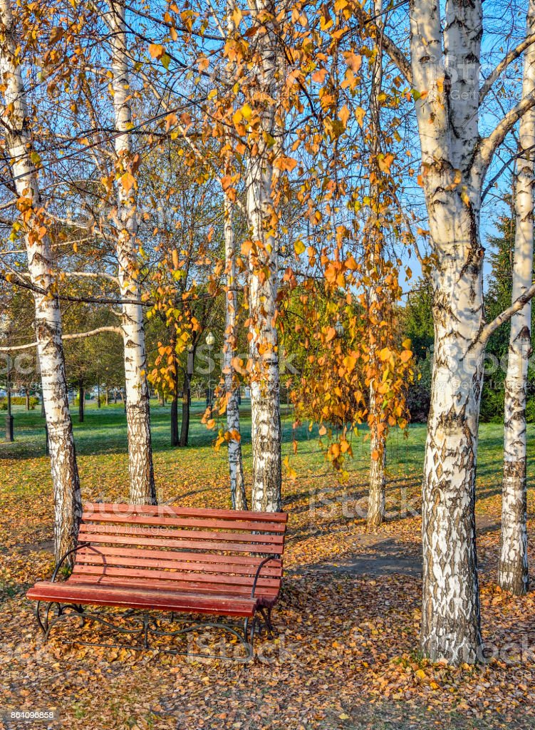 Wooden bench in autumn city park under the birch trees royalty-free stock photo