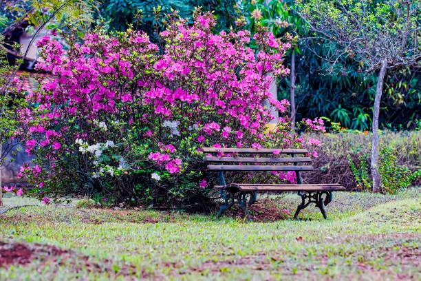 Wooden bench in front of a azalea bush in the garden picture id1028806988?b=1&k=6&m=1028806988&s=612x612&w=0&h=lr 4riafo7ke25xmmi2mmiaqjtmsl z75mpboaayhcc=