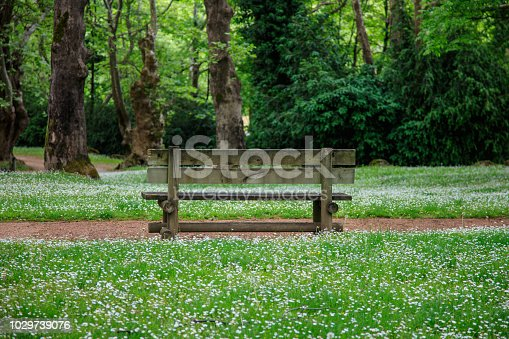 View on empty wooden bench in green summer park