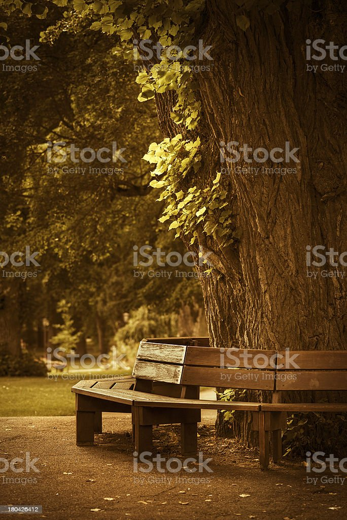 Wooden bench in park royalty-free stock photo