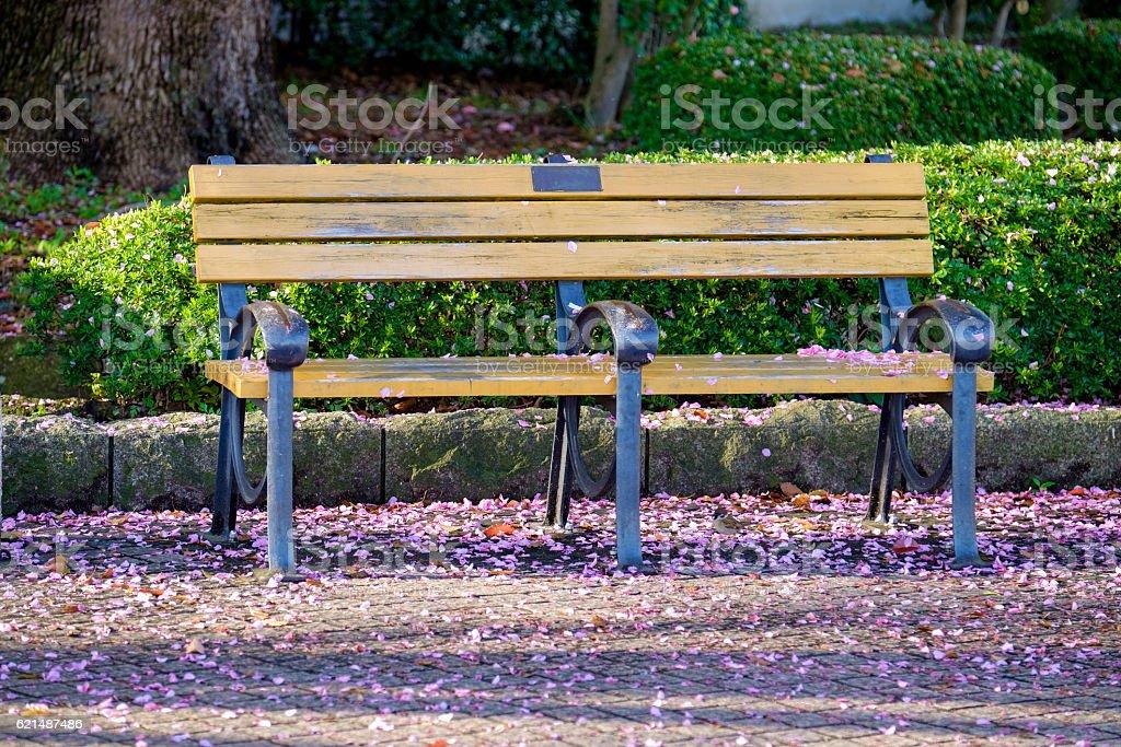 wooden bench in park with fallen sakura Lizenzfreies stock-foto