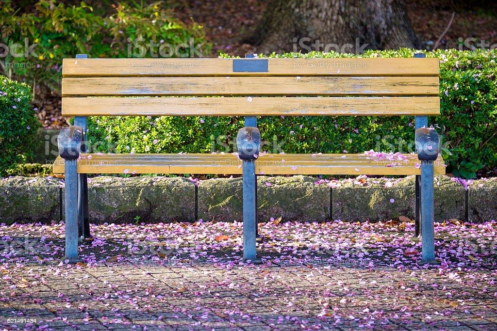 wooden bench in park with fallen sakura photo libre de droits