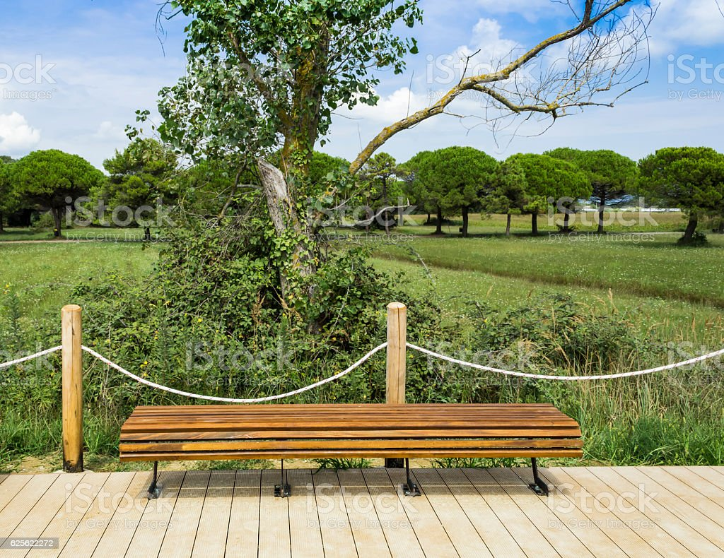 Wooden bench in the park stock photo
