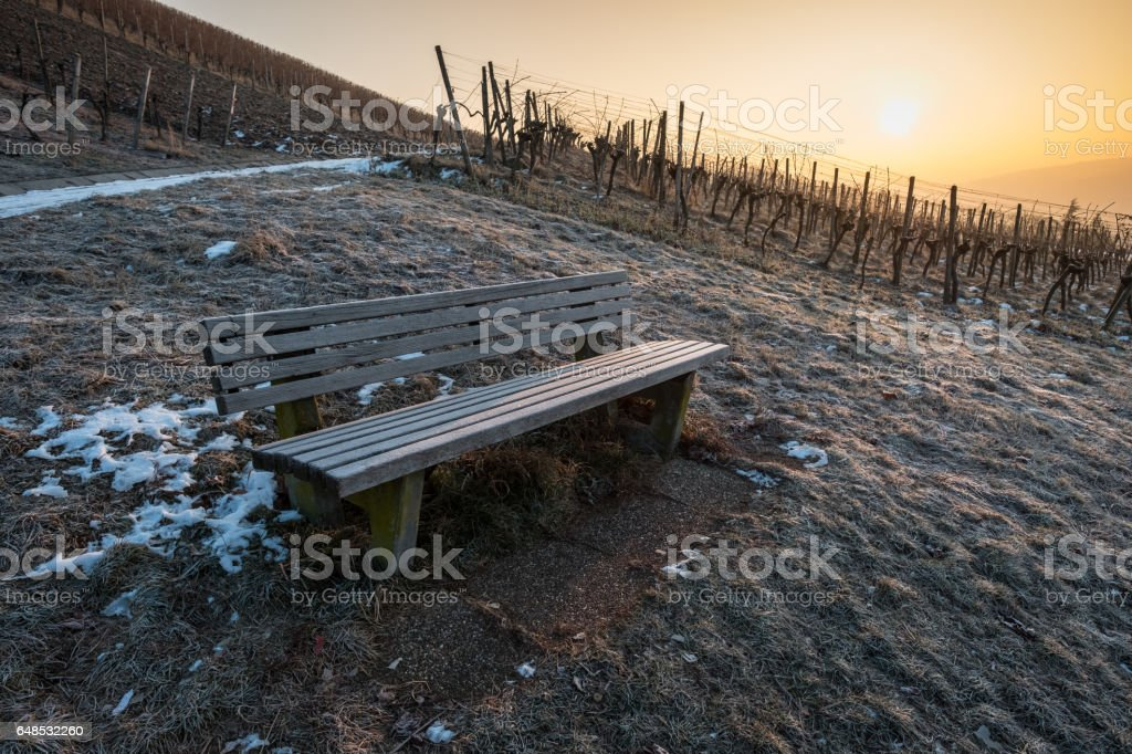 Wooden bench in winter in a vineyard stock photo